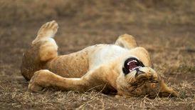 عکسهای کمدی برگزیده از حیاتوحش